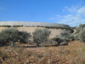 MUQAWAMA Al-ZEITUN. Testimonianze di scambi, resistenze e ritorni dal mondo agricolo palestinese