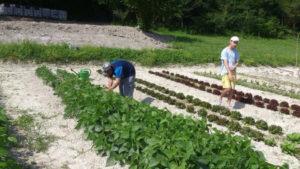"""Lavoro nell'orto al minicampo presso la Comunità """"Al Gallo"""""""