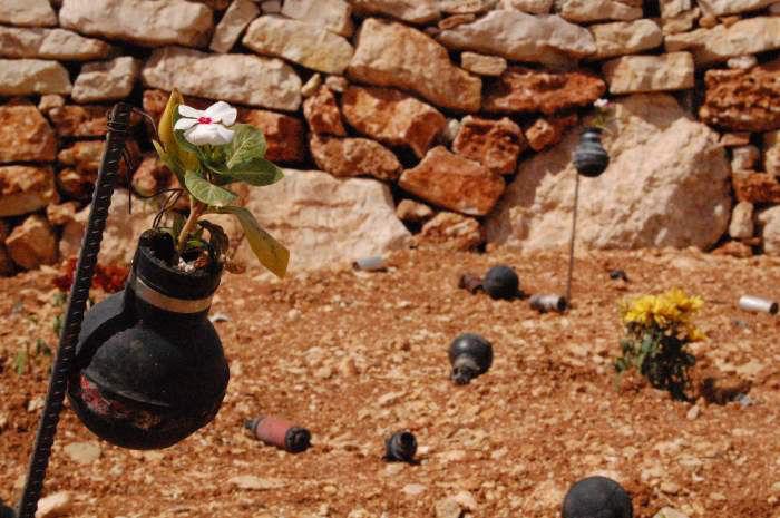 #PalestinaOlive: Tra olive e resistenza