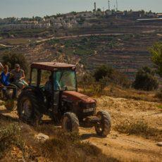 Vite di speranza: racconto di un campo di volontariato in Palestina