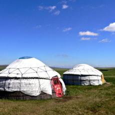 Un'estate in Mongolia: agricoltura ecologica nelle steppe