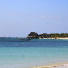 Zanzibar: volontariato nelle foreste di mangrovie dell'isola