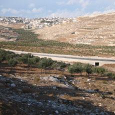 Campo in Palestina: costruire ponti di riconciliazione