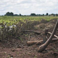 Nigeria: volontariato a lungo termine nella fattoria di Eruwa