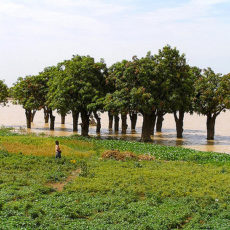 Promuovere lo sviluppo della comunità di Koriba: un campo in Burkina Faso