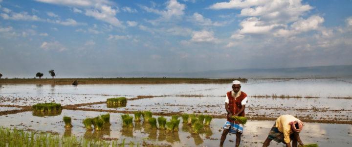 Riforestazione e sviluppo sostenibile: un campo in Bangladesh