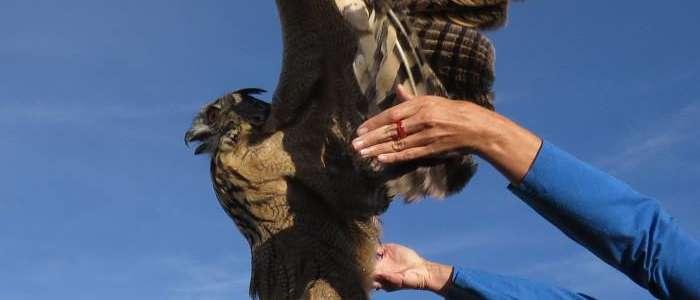 Prendersi cura degli uccelli e degli animali selvaggi: un campo in Spagna