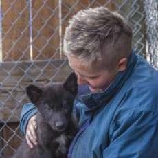 """""""Mission: Wolf"""": prendersi cura dei lupi e dei cani-lupo nati in cattività"""