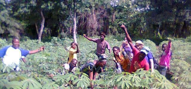 Permaculture Forest Garden: un campo per la riforestazione in Nigeria