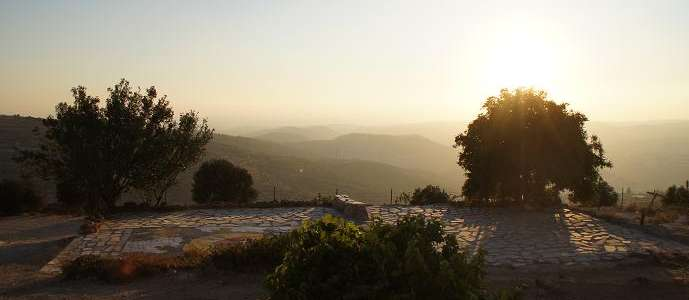 Il mandorlo come albero della speranza: un campo per il raccolto in Palestina