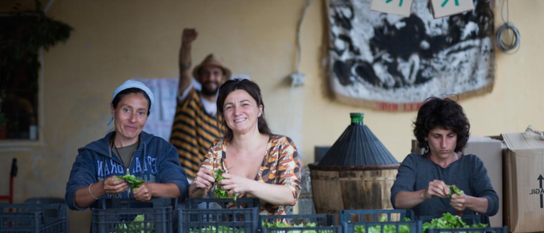 Mondeggi Bene Comune: un campo in una Fattoria Senza Padroni