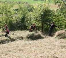 Tutela e conservazione della Cintura Verde d'Europa: campo in Austria