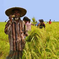 Un campo in Bangladesh per la pace e la risoluzione dei conflitti