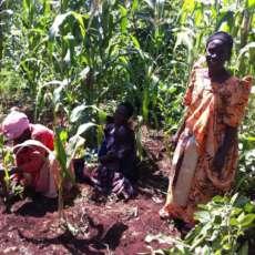 Riforestazione e protezione ambientale: un campo in Uganda
