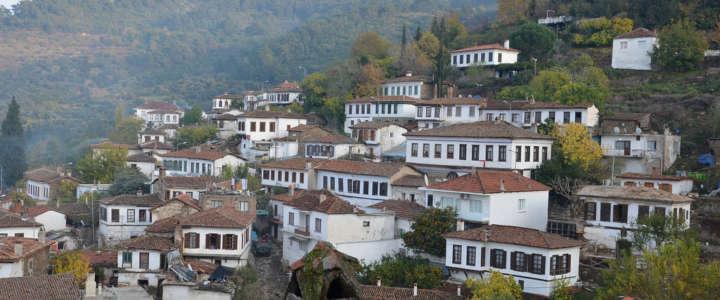 Supportare la raccolta delle olive: un campo in Turchia
