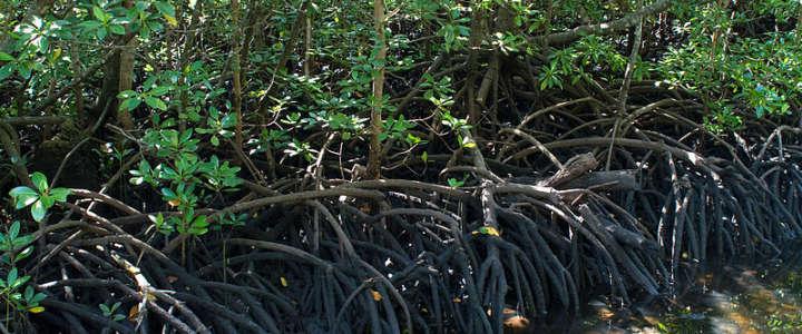 Educazione e tutela ambientale nelle isole Zanzibar, in Tanzania