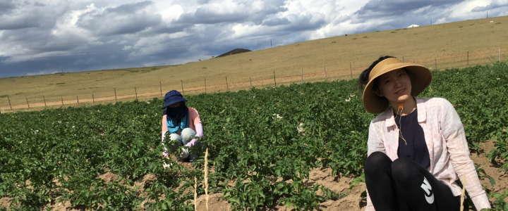 L'agricoltura è condivisione: testimonianza da un campo in Mongolia