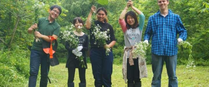 Vita comunitaria e raccolta degli agrumi: un campo in Giappone
