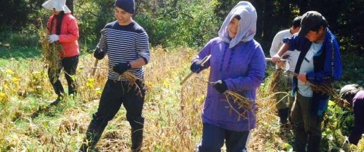 Ecologismo, ambiente e biodiversità: un campo in Giappone