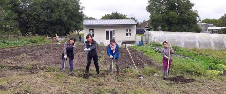 VSI Ireland cerca un/a volontario/a lungo termine per 12 mesi di progetto