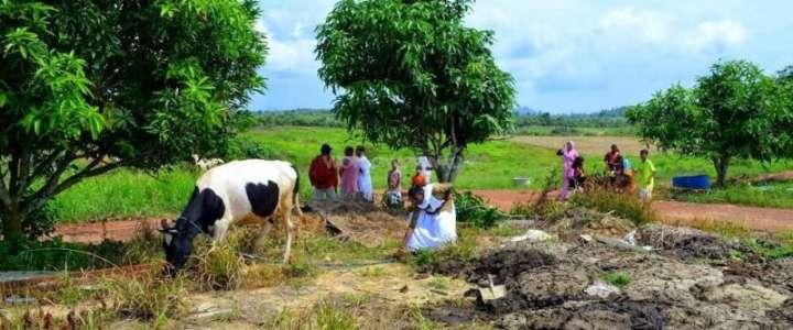 Agricoltura e gestione di una fattoria ai Tropici: un campo in Malesia