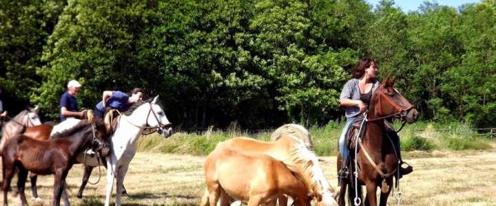 SCI-Italia cerca dei/lle coordinatori/trici per un campo in un centro equestre vicino Roma