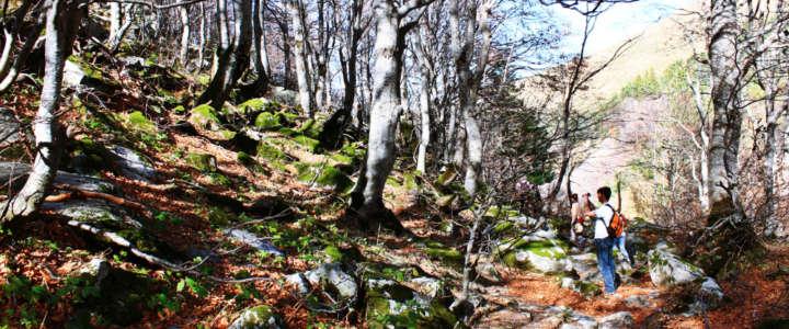 Tutela della biodiversità di un parco naturale: uno SVE con GAIA Kosovo