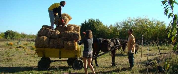 """Promuovere la sostenibilità ambientale nella """"Dea's farm"""": un campo di volontariato in Bulgaria"""