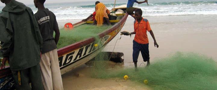 Supportare lo sviluppo sostenibile e comunitario: un campo in Senegal