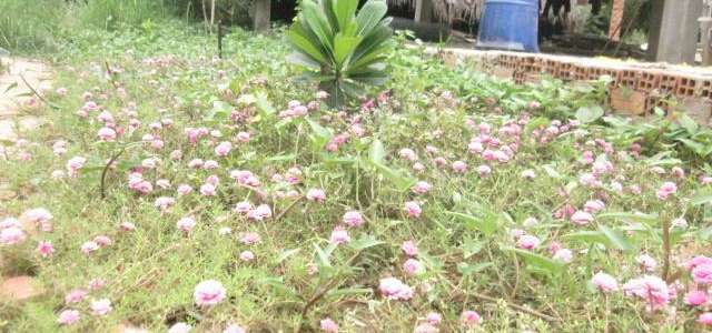 Un progetto per sostenere l'agricoltura biologica in una fattoria vietnamita