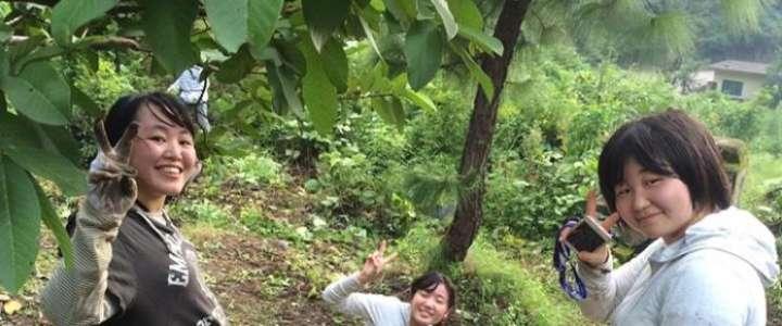 Riscoperta delle tecniche agricole locali: un campo in Giappone
