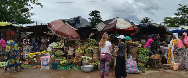 Praticare la permacultura nel settore ortofrutticolo: un campo in Togo