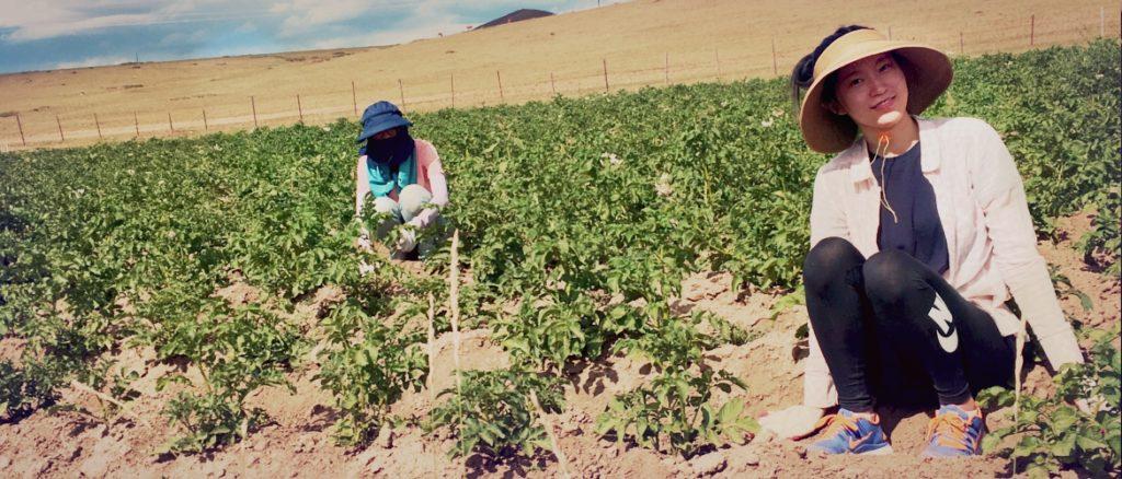 mongolia campo di volontariato internazionale