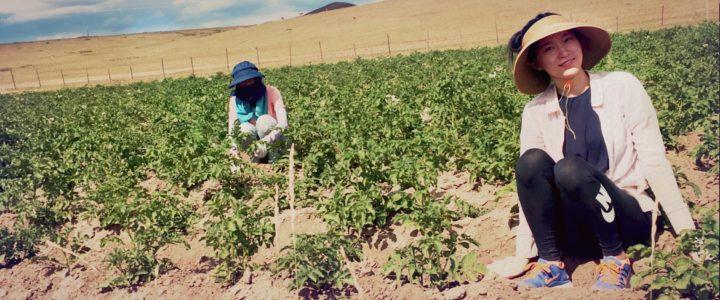 Sviluppo ecosostenibile e solidarietà: un campo di volontariato in Mongolia