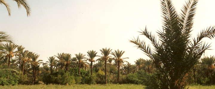 La vita di un'oasi tra ambiente e cultura: un campo di volontariato in Tunisia