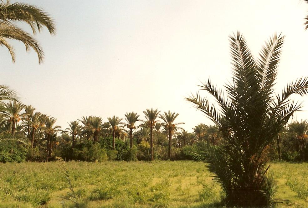 la vita di un'oasi campo di volontariato in tunisia