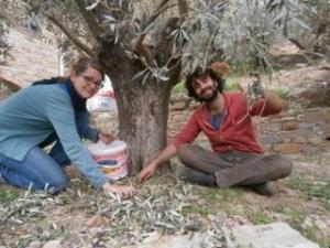 Un campo in Turchia per collaborare nella raccolta delle olive