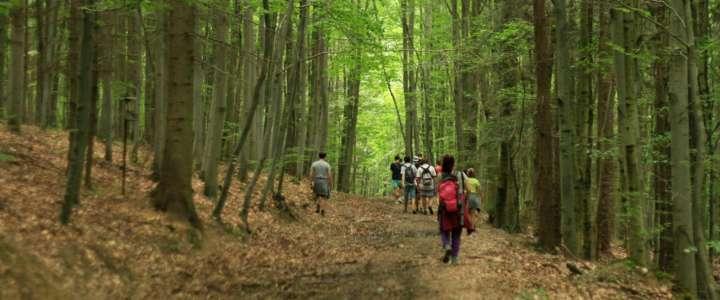Un campo nell'Isola di Zanzibar: conservazione ambientale e piantagione di alberi