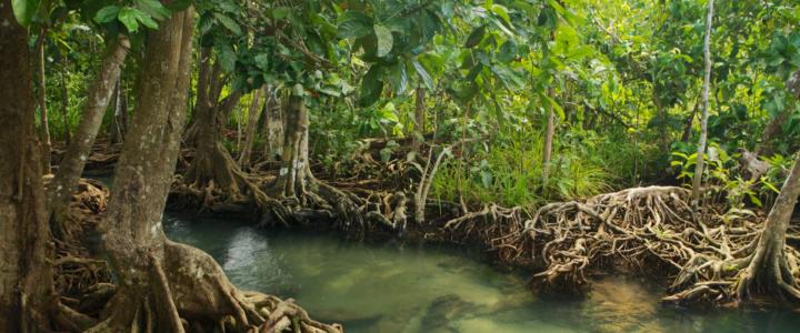 Un campo di volontariato internazionale in Thailandia, per la conservazione delle Mangrovie