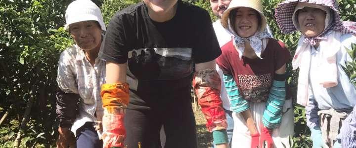 Giappone: una testimonianza dall'isola Shikoku, tra agricoltura e spiritualità