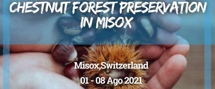 Workcamp in Svizzera: Chestnut forest preservation in Misox (Soazza GR)